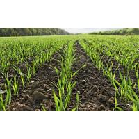 Вибір протруйника для гарантованого врожаю: нюанси, поради експертів