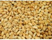 Пшеница озимая Юлия